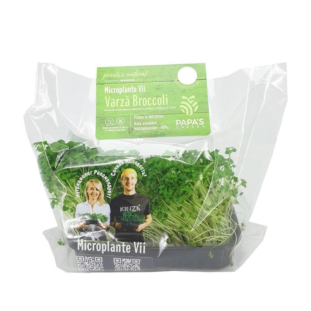 Microplante Broccoli