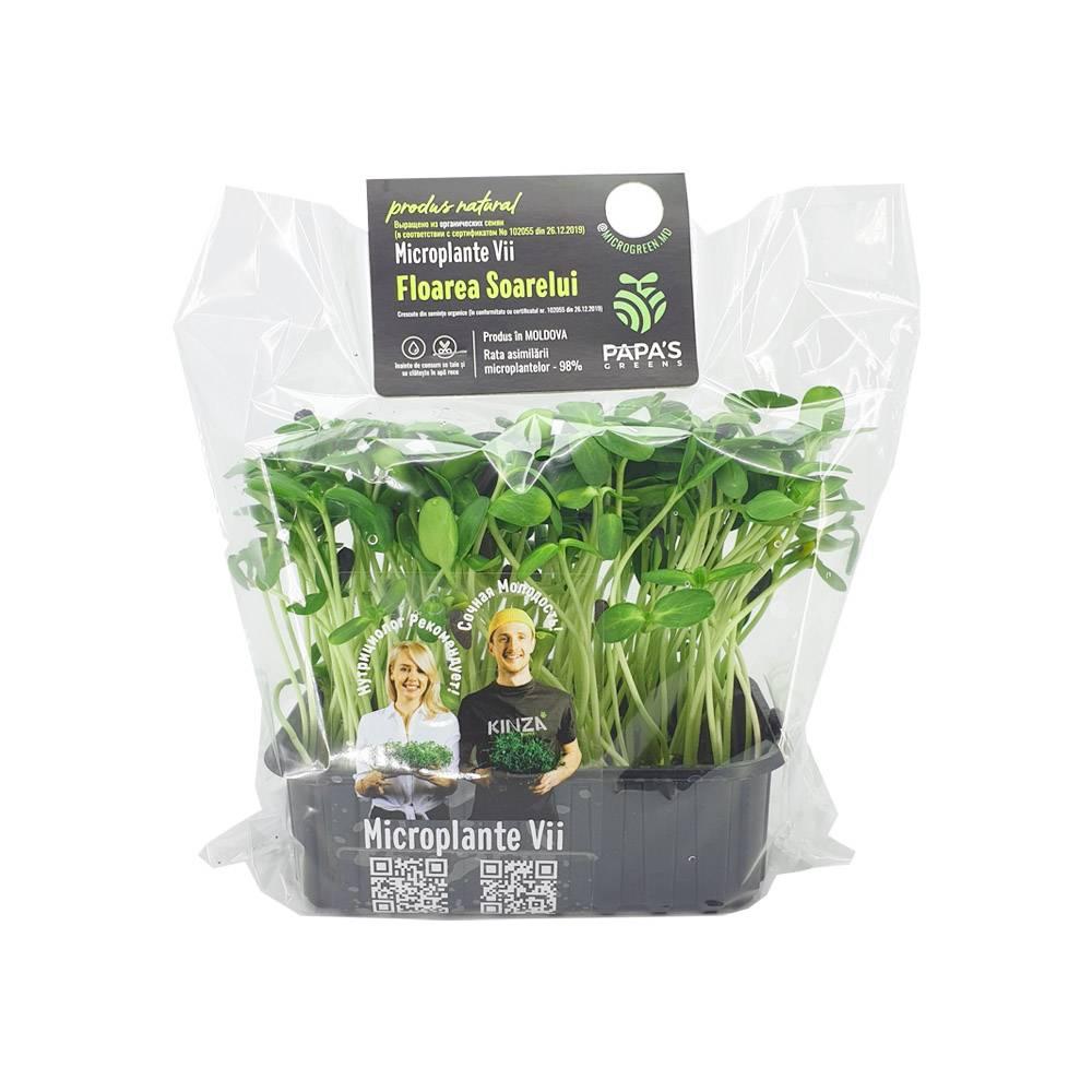Microplante Floarea Soarelui